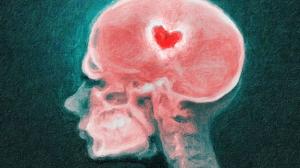 cabeza humana con corazón en medio. amor.